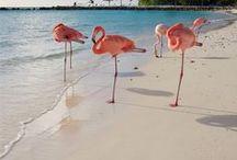 Pink ~ Coral ~ Peach