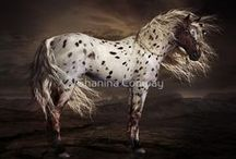 """Appaloosa / The Appaloosa, the world's oldest identifiable breed of horse.  """"One thing to remember is to talk to the animals. If you do, they will talk back to you. But if you don't talk to the animals, they won't talk back to you, then you won't understand, and when you don't understand you will fear and when you fear you will destroy the animals, and if you destroy the animals, you will destroy yourself."""" ~Chief Dan George / by Shannon Jones"""