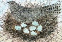 Art I Love Birds, Feathers & Nests / by Patricia Boyd