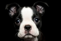 animals I really really really want!!! :] <3  / by Alexandra Campos
