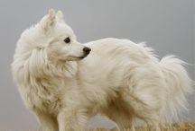 white hart / beloved companion, messenger, emissary