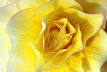 Flowers etc. / Beautiful Photos / by Cheri Raffell