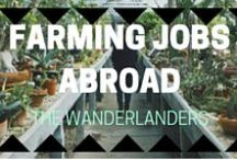 Farming Abroad Jobs / Advice and jobs for farming/ fruit picking abroad
