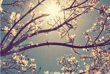 Pretty Pics