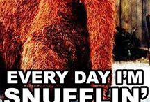 Everyday I'm Snufflin' / by Hayley Kissick