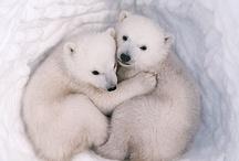 Polar Bears / Weather men? / by Pat A. Thompson