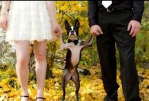 Wedding Pets / Man's best friend has to be included in the festivities. How to include your pets into your special day.