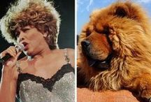 Celebrities and Dogs