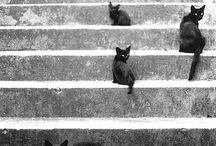 Cats..Cats..Cats....