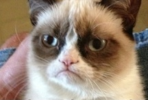 I <3 Tard the Grumpy Cat / by Pat A. Thompson
