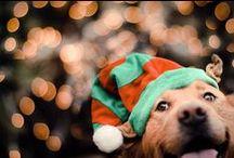 Holiday Spirit of Dog