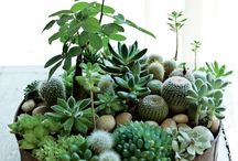 DIY cactus & succulents / Crafts with succulents and cactus