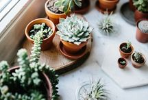 INTERIOR decor cactus / Cactus inspired interior decor. diy and styling ideas.
