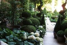 gardens / by Raquel Shields