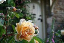 ~~ Gardening ~~ / by Tracy Benyshek Kiser