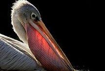 ~~ Birds ~~ / Birds, beautiful birds / by Tracy Benyshek Kiser