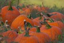 Fall / Fall is in the air! / by Cozette Winters
