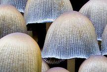 Mushrooms / by Nikki Gagliano