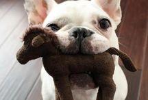 Dog Love / Cutest dog photos and dog love
