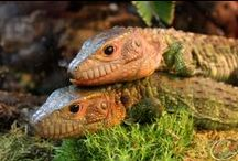 Caiman Lizard / by Zoo Med Laboratories