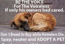 Be Their Voice / Follow this board if you support all of those animals that deserve a loving forever home. / by Nikki Gagliano