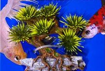 Aquatic Décor and Enrichment / Jazz up your pet's habitat with Zoo Med Aquatic Décor. / by Zoo Med Laboratories