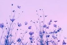 """palette: the color purple / """"i only wanted to see you underneath the purple rain."""" -prince"""