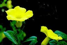 Flowers / Plants, garden, flowers, etc...