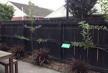 Garden espalier fruit trees