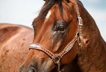 """emilyPEAK  P H O T O G R A P H Y / Western Lifestyle.Fine Art ...with the occasional """"somethin' somethin' """" thrown in..."""