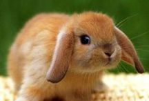 Cuteness Overload / Animal cuteness