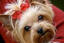 Doggy Stylin