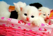 Cutimals - Cute Animals / Cute animals for a better day