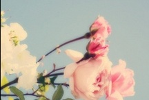 flowers / by Leea Dandelion