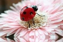 Ladybugs  / by Julie Ervin