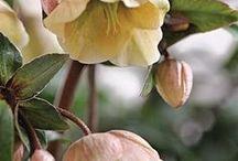 nature | flowers / a board dedicated to beautiful flowers in nature - the earth laughs in flowers | ralph waldo emerson