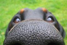 Dog Nose Love / Dog Nose Necklaces, pendants, portraits and dog memorial keepsakes