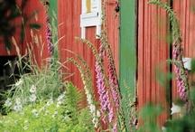 Garden - trädgård / ...& other outside pics.  Att påta i trädgården är det bästa jag vet. Bilderna speglar förhoppningsvis min smak; det ska vara lite rufft och inte för prydligt!  / by Ann-Louise Söderberg
