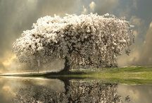Tree Love / by D. Donnell