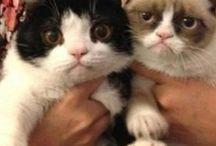 I love Grumpy Cat and Pokey!! / by Jill Nesnadny