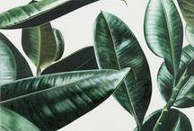 Miilla // Plants