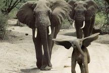 life⊱ un éléphant  / by ᶫᵒᵛᵉᵧₒᵤ  ~ Julia