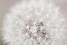 White / by Sara Burns