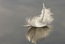 ··⊱ feather / ~~ what an intriguing creation, the feather ~~ / by ᶫᵒᵛᵉᵧₒᵤ  ~ Julia