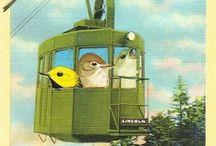··⊱ little birdies in my head / ~~ little birdies in my head ~~ i love birds and bird imagery ~~ / by ᶫᵒᵛᵉᵧₒᵤ  ~ Julia