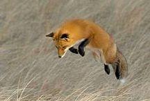 Rusty Foxy