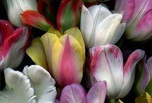 Flores / by Lourdes