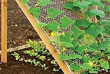 [ Gardening ] / by Michaele Sommerville