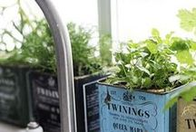 green thumbs / gardening tips & ideas / by Jessica Borchers