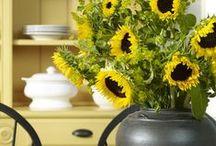 :: Sunshine Cottage :: / by Eleanora Rinaldi